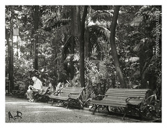 Square of the Peace (ruskaia) Tags: park parque brazil tree bench way peace br sopaulo banco paz oldman thinking vegetation feeling rvore velho caminho vegetao revelation exist idoso pensamento existir sentimento revelao