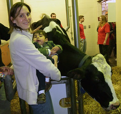 Cow at the Vet school Open House