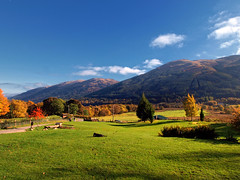 Braes of Balquhidder (edowds) Tags: autumn trees dog mountains scotland scenery view stirling scenic braes balquhidder thechallengegame monachylemhorhotel