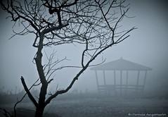 Inside The Mist