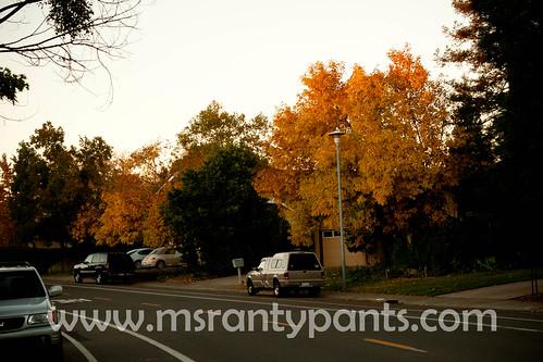 Fall Color 2010.jpg
