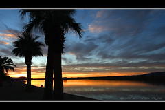 Palms in Parker (Miserlou) Tags: sunset color reflection water silhouette race river palms scott az roadtrip hills palmtrees shore coloradoriver couds parker 1022 enduro 2010 theriver canon1022 paker canon40d bluewatercasino stryderphoto