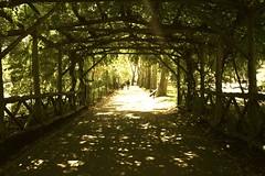 Central Park (Kaarroo) Tags: park nyc newyorkcity trees shadow sun ny newyork love centralpark tunnel romantic