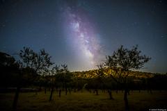 Tajillos at night (jesbert) Tags: estepa noche night irix lens sony a7r2 via lactea milky way astronomy sky cielo nightscape
