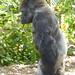 MonkeyJungle17