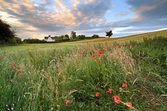 ENGLISH SUMMER (Tony Armstrong-Sly) Tags: britishsummer landscape barley poppies summer sky fields crops farm farming westmidlands kidderminster evening light trees grass grasses weeds wildflowers flowers nature