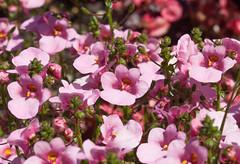 Blumen (Matthias Wicke) Tags: badherrenalb blume blüte gartenschau gartenschaubadherrenalb2017 kurpark landesgartenschau
