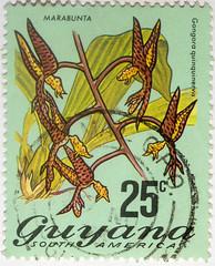 Guyana 25 cents Marabunta corrected