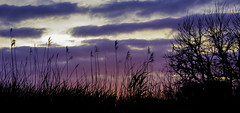 Sunset Clouds Through Trees and Reeds (chris.willis3) Tags: hillhead titchfieldhaven outdoors reeds sunset clouds tree evening colours nikon d5200 chriswillis3