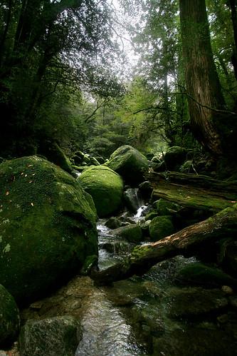 Yakushima River - 09