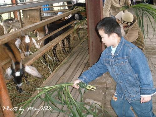 2009 12 20_13可達羊場.JPG