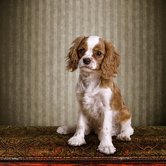Serious Milton (Geir Akselsen) Tags: portrait dog pet cute animal serious mansbestfriend milton
