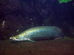 berlin aquarium