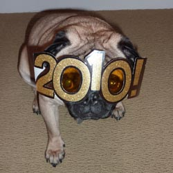 Happy 2010 from the pugs!
