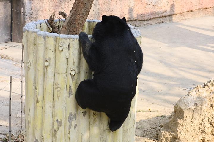 2010壽山動物園0017
