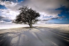 . (dan barron photography - landscape work) Tags: light sky snow tree field clouds shadows web northumberland
