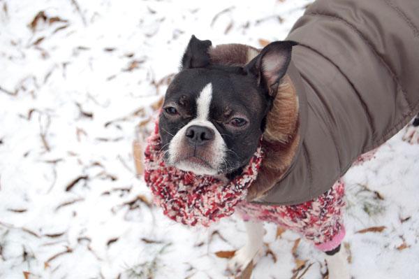 Bebe in the snow