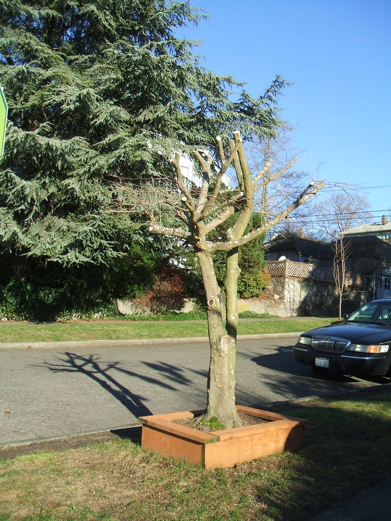 Tree pruning disaster