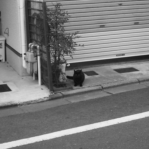 Today's Cat@2010-01-10