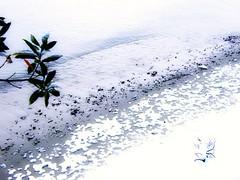 la visite de la neige (florenarocena) Tags: schnee snow beach beautiful strand nieve playa neige plage elur ondartza estremità expressyourselfaward