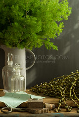 beautiful things (mwhammer) Tags: wood stilllife green beautiful metal stone modern afternoon cork sunny fresh exotic lush glassbottles seaplant antiquebox greenfern melinahammer oldrelics foodandpropstyling
