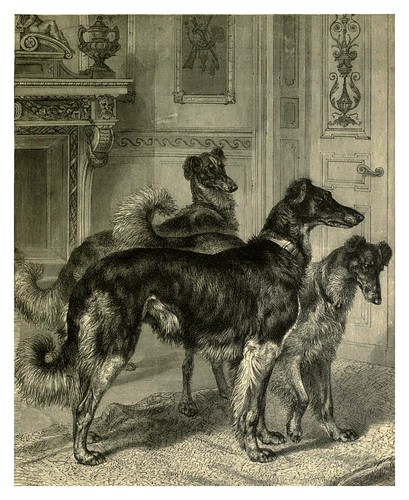 010-Wolfhunds Siberianos-The illustrated book of the dog 1881- Vero Kemball Shaw