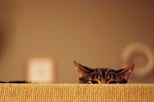 031 - bobo sneaky cat