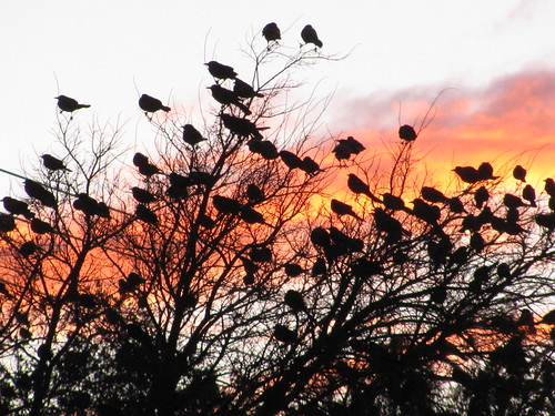 Sunset Birds 1
