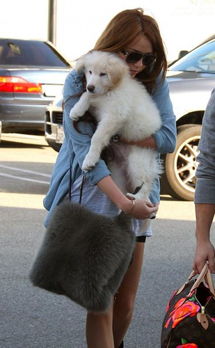 miley-cyrus-puppy-new (2)