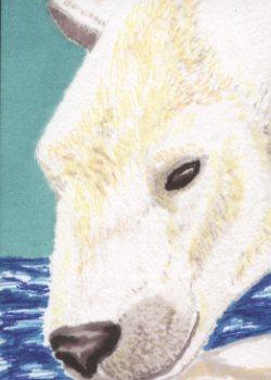 26-Polar Bear