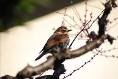 birds_2010-01-26_1