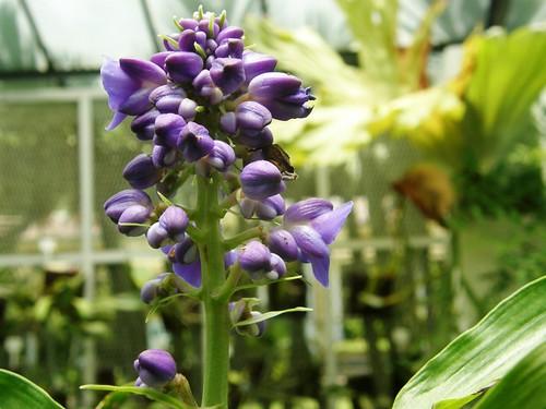 orquidea 12