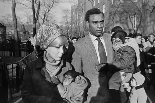 winogrand_chimp