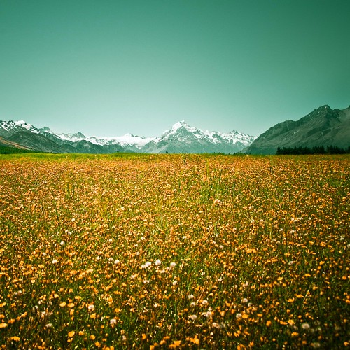 Cuba Gallery: New Zealand / landscape / mountain / background / yellow / flowers / grass