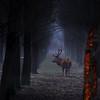 Dawn was breaking deep in the forest (B℮n) Tags: birds fauna topf50 goose topf300 naturereserve mammals topf100 500faves topf200 wildhorses reddeer flevoland brantacanadensis ecosystem snowylandscape avifauna tms wildanimals redfox topf400 oostvaardersplassen topf500 tellmeastory winterinholland staatsbosbeheer konikhorses edelhert konikpaarden almerebuiten topf700 oostvaarderplassen 100faves 50faves topf800 zoogdieren 200faves grauweganzen grotecanadesegans 300faves winter2010 edelherten 400faves heckrunderen heckcattle 700faves 800faves bosdomesticus densewoodland manybirdspecies ingangkottertocht largegrazinganimals strongestwillsurvive harshwinterkillsdutchwildlife herbivorestokeeptheareamoreopen nohumandisturbance heckrundafstammenoeros uniquenatuurgebied dutchpolderlandscape ducthprairieinwintertime haastonnederlandseaanblik hashwinter2010 naturereserveinthenetherlands wildlifeinthewinter winterstarvation wildernessinthecentralpartofthenetherlands lelydstad greatcanadagoose runderrassen heckbull prachtigwintervergezichten reddeerinthewild eatenbark marculescueugendreamsoflightportal