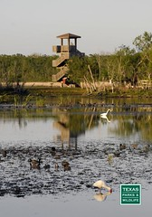 Brazos Bend State Park (Texas Parks and Wildlife) Tags: river birdwatching observationtower brazosbendstatepark birdphotography floodplains brazosriver freshwatermarshes brazosriverfloodplainsfloodplains