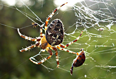 Trap (sjaradona) Tags: sun nature spider web 2007 flickrbestpics thebestmacrophotos