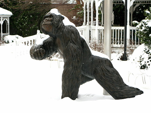 Gorilla in the Snow