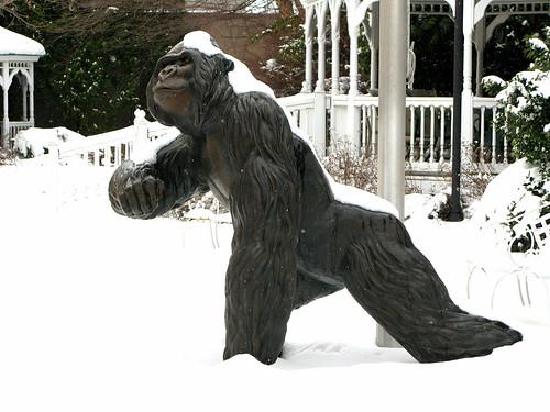 Gorilla in the Snow