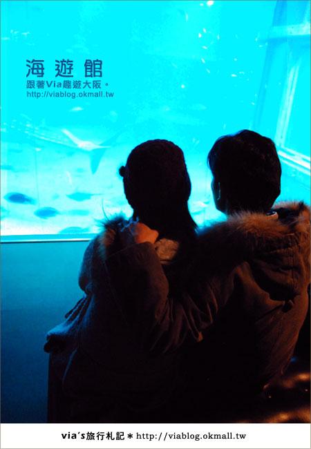 【via關西冬遊記】世界最大極的水族館~大阪海遊館23