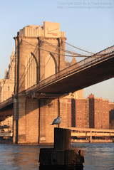 US-7 (K.Thadchapong Fotography) Tags: newyork empirestatebuilding wallstreet flatironbuilding grandcentralterminal chrylserbuilding brookylnbridge