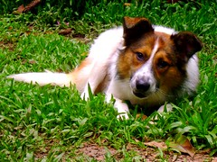 Frodo, my crazy dog! (L.Lukatsky) Tags: dog pet cute friend collie border sable best fofo frodo