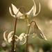 Fawn White Photo 13