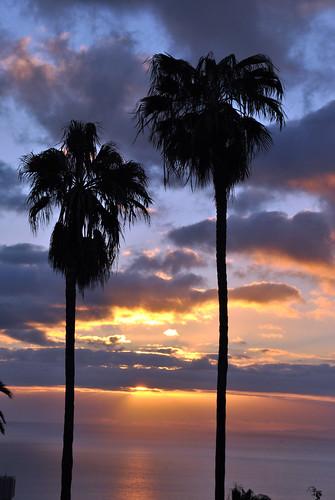 Amanecer con palmeras