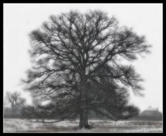 790 Tree (Nebojsa Mladjenovic) Tags: winter light mist france tree nature digital rural landscape outdoors lumix burgundy hiver panasonic paysage bourgogne campagne arbre zima priroda morvan fz50 drvo yonne svetlost mladjenovic