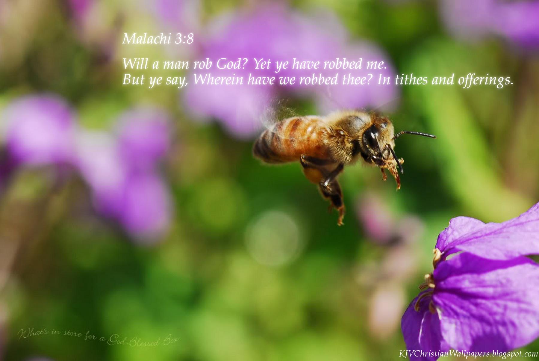Malachi Holy Music