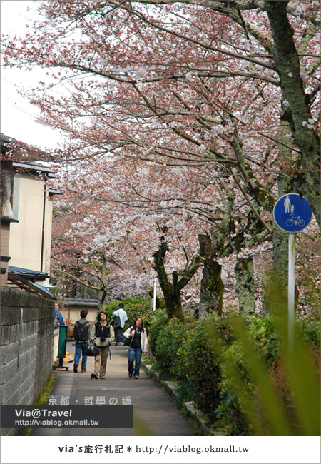 【via關西賞櫻行】京都賞櫻景點~哲學之道12