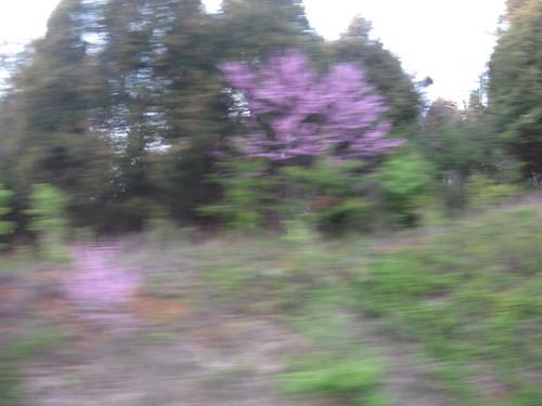 blur & bloom