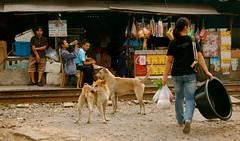Black Bucket (sherrattsam) Tags: road people dogs thailand asia bangkok tracks skytrain toei bts klong thep toey krung petchbaburi