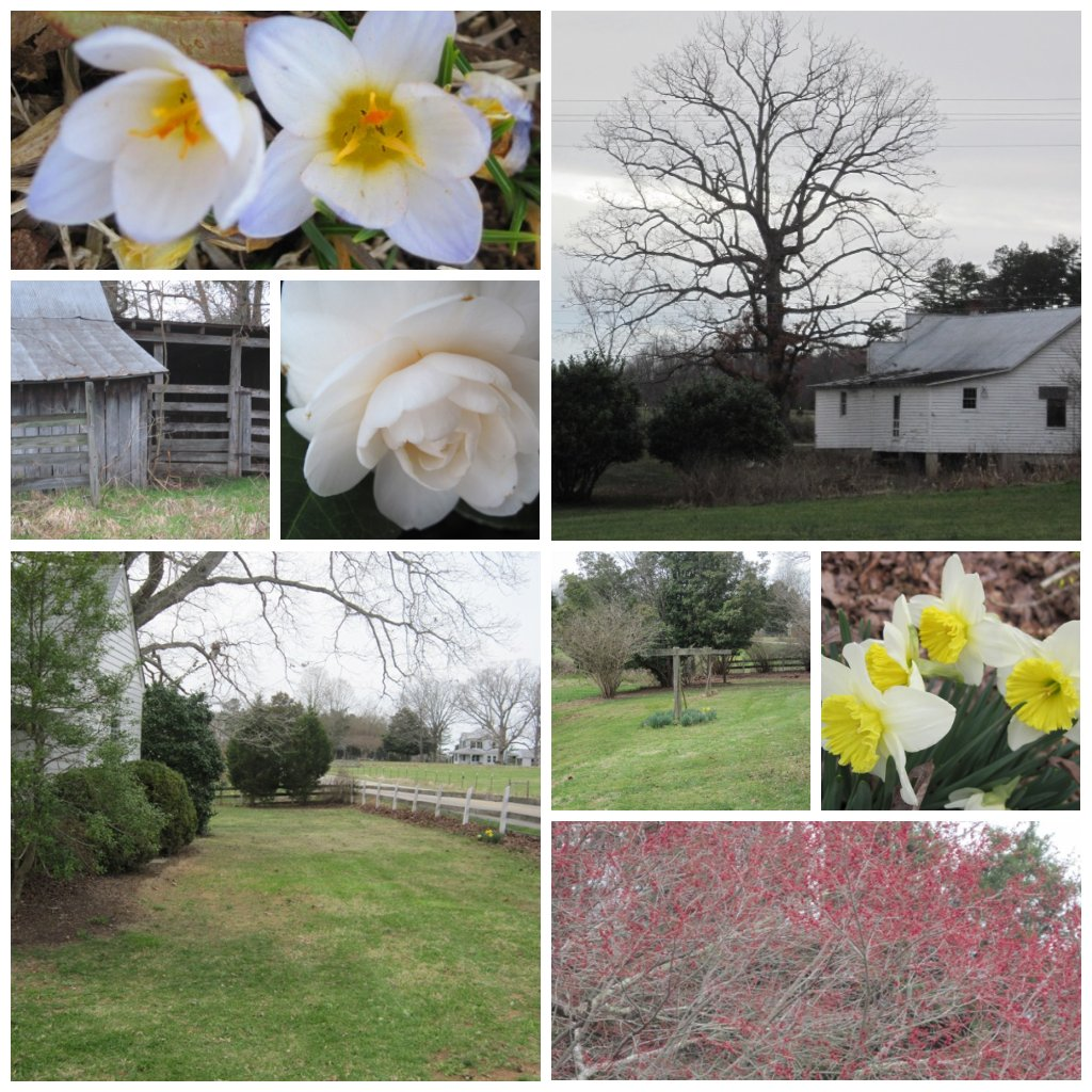 Spring Collage- March 10